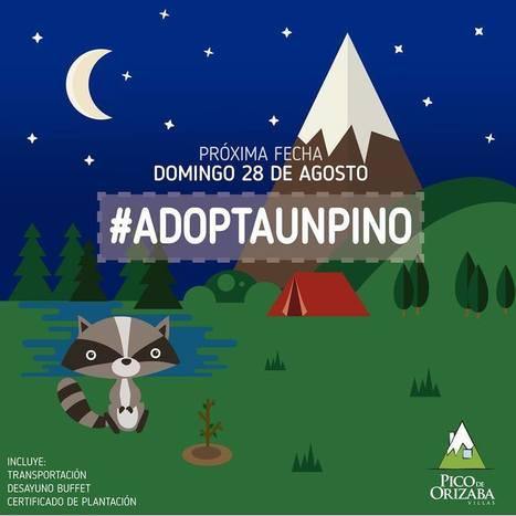 Adopta un Pino y haz la diferencia | Asómate | Educacion, ecologia y TIC | Scoop.it