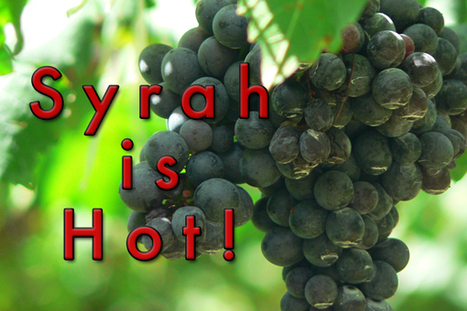 Syrah is hot!   All Things Wine and Food!   Scoop.it