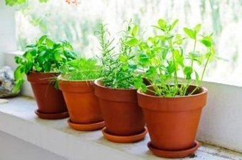 Les plantes aromatiques à cultiver sur son balcon - Info senior | potager d'intérieur | Scoop.it