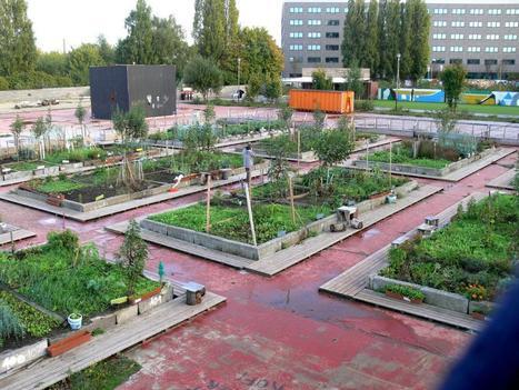 Le potentiel considérable de l'agriculture urbaine : des bénéfices multiples à exploiter - Construction21   BTS-M22-ville-en-mutation   Scoop.it