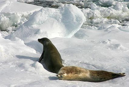 l'hiver en péninsule antarctique | Hurtigruten Arctique Antarctique | Scoop.it