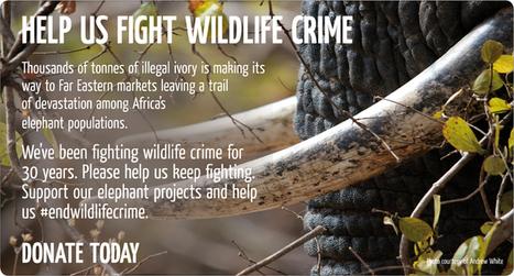 David Shepherd Wildlife Foundation : Help us to save endangered mammals | Nature conservation | Scoop.it