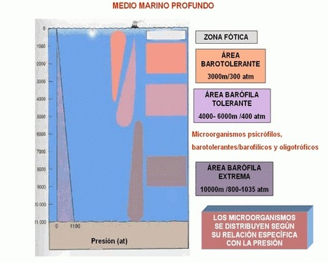 Microbiología en el medio marino profundo | Principios de Microbiología Marina | Scoop.it