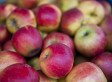 'Glorious Nation' Where Apples Originated | Sustainable Futures | Scoop.it