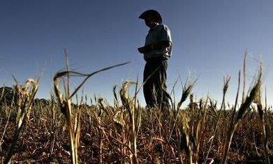 Climate change 'already affecting food supply' – UN | Bees | Scoop.it