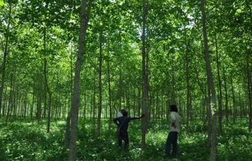 Faber-Castell reforesta 2000 hectáreas en el norte de Colombia : El Papel digital | @LaPlame, Papelería en México, | Scoop.it