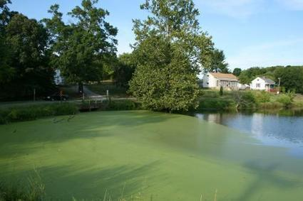 Going green: Nation equipped to grow serious amounts of pond scum for fuel | Sustain Our Earth | Scoop.it