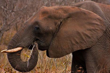 Do Wild Animals Get Drunk and High On Purpose? | Strange days indeed... | Scoop.it