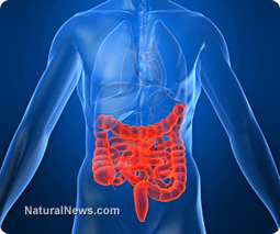 Healthy gut bacteria help body regrow intestinal cells, surprised researchers discover | Content | Scoop.it