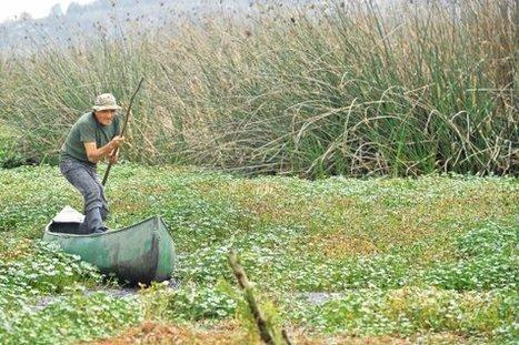 El guardián de la última gran laguna de la sabana de Bogotá | Regiones y territorios de Colombia | Scoop.it