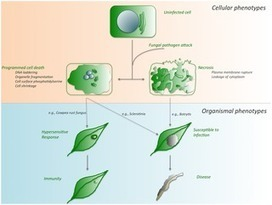 PLOS Pathogens: Death Be Not Proud—Cell Death Control in Plant Fungal Interactions | Plant protection | Scoop.it