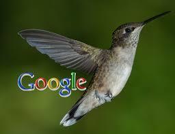 Know More Google's Hummingbird Algorithm | SEO Training Institute | Scoop.it