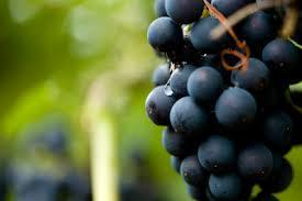 Red Wine and Resveratrol may protect against age-related cognitive decline? Click to learn more. | Biotivia Longevity | Scoop.it