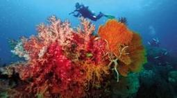PH top 5 dive sites still world's best | Scuba Dive Travel | Scoop.it