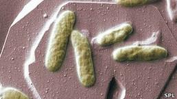 """Llegan las """"bacterías"""", pilas hechas con bacterias - Fundación Moisés Bertoni   Infraestructura Sostenible   Scoop.it"""