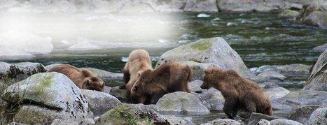Fresh Snow and Sunshine - Road Trip to Skagway! | Alaska Tourism | Scoop.it