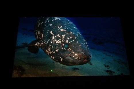«Le Cœlacanthe, plongée vers nos origines» – Avant-première   Underwater   Scoop.it