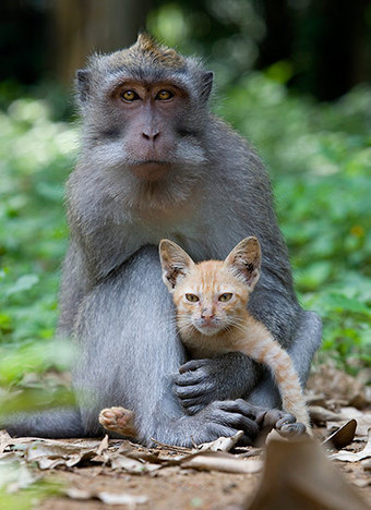 The monkey and the kitten | Scoop Indonesia | Scoop.it