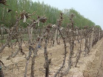 Great Cabernets from China at the Decanter Shanghai Fine Wine Encounter | Chine et Vins Français: Une affaire de goût en devenir | Scoop.it