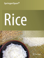 Small and round seed 5 gene encodes alpha-tubulin regulating seed cell elongation in rice   Rice origins and cultural history   Scoop.it