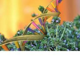 Herbal Medicine Alters Genes, Cell Mitosis and Epigenome | Reading Pool | Scoop.it