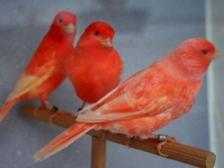Govt bans import of exotic pet birds | Égypt-actus | Scoop.it