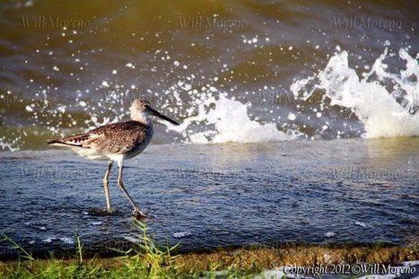 Birding Around in Belize - Photos and Videos of Belize | Belize in Photos and Videos | Scoop.it