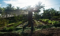 The farmer who's starting an organic revolution in Cuba   Questions de développement ...   Scoop.it