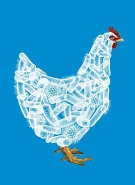 Why Did the Chicken Make You Sick? - The New Yorker | Media Cultures: Microbiology in the news | Scoop.it