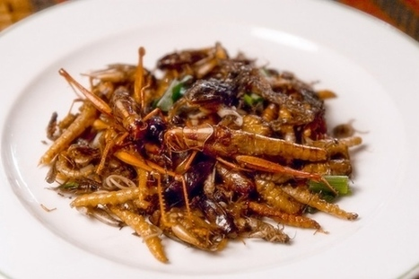 California's First Dedicated Edible Cricket Farm is Trying To Change How We Eat | Entomophagy: Edible Insects and the Future of Food | Scoop.it