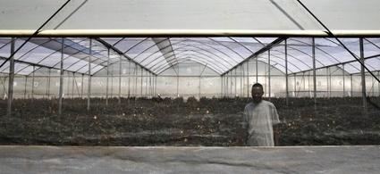 La Banque mondiale roule-t-elle pour Monsanto? | Questions de développement ... | Scoop.it