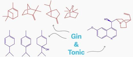 Why does gin and tonic taste so good? | Erba Volant - Applied Plant Science | Scoop.it