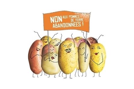Patathon : récolter les patates restantes dans les champs pour lutter contre le gaspillage alimentaire | EFFICYCLE | Scoop.it