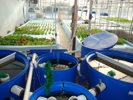 Aquaponics new facet of agriculture, combines fish, vegetables - Agri-View | Aquaponics in Action | Scoop.it