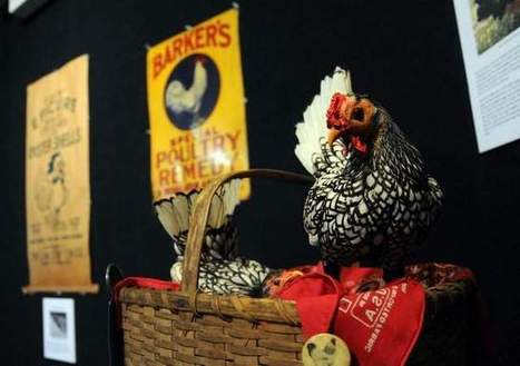 History of chicken on display - Delmarva Daily Times | Africa and Beyond | Scoop.it