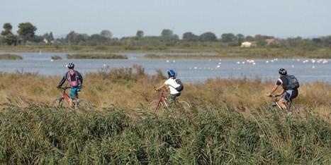 Camargue : Une voie verte pour une vie en rose | De Natura Rerum | Scoop.it