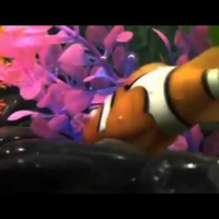 These Incredibly Lifelike Robotic Fish Will Never Go Belly Up | Strange days indeed... | Scoop.it