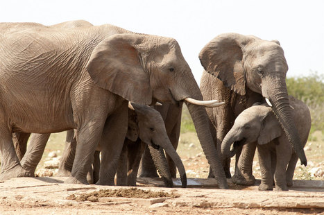 Espèces sauvages : l'ONU entre en lutte contre les braconniers | Biodiversité | Scoop.it