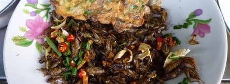 Fear and cooking in Cambodia - | Entomophagy: Edible Insects and the Future of Food | Scoop.it