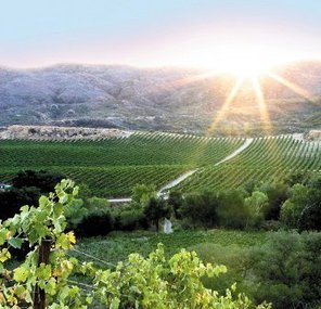 Temecula Wine Country exhibit to open at museum | Winecations | Scoop.it