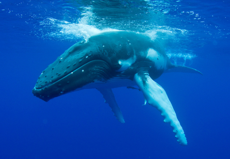 Urge Federal Officials to Save Marine Animals From Navy Tests! | Liquid Health News | Scoop.it