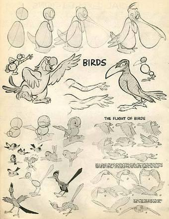Drawing Cartoons - Part 3, Birds | VeranderVrolijk | Scoop.it
