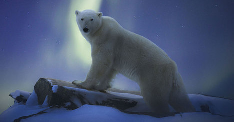 WWF:n Earth Hour | POLKKA-UUTISET | Scoop.it