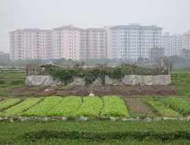 Focus: Agriculture urbaine | agriculture urbaine | Scoop.it