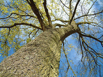 Want a Free Tree for State Arbor Day?   Energy Saving Trees   Scoop.it
