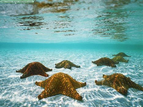 Under Sea | Favorite pictures | Scoop.it