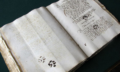 Cats leave their mark on centuries of books | LibraryLinks LiensBiblio | Scoop.it