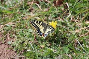 Papillons et libellules : L'Observatoire Aquitain de la Faune Sauvage transmet plus de 25 000 données à l'INPN | EntomoNews | Scoop.it