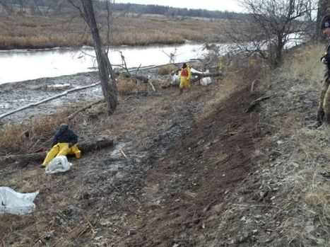 Wildlife manager: Oil spill at Yellowstone, Missouri confluence not cleaned up ... - The Missoulian   NC Wildlife   Scoop.it