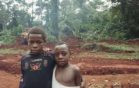 Le WWF, partenaire d'une entreprise d'exploitation forestière française qui détruit le territoire des 'Pygmées' baka   Critique du changement   Scoop.it
